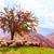 birka · domboldal · áll · szélmalom · tavasz · mező - stock fotó © fesus