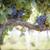 luxuriante · maduro · vinho · uvas · névoa · gotas - foto stock © feverpitch