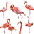 collection of flamingos isolated on white stock photo © feverpitch