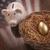 golden egg nest and piggy bank with american flag reflection stock photo © feverpitch