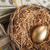 golden egg in nest and thousands of dollars surrounding stock photo © feverpitch
