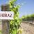 shiraz sign on vineyard post stock photo © feverpitch