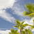 majestic tropical palm trees against blue sky and clouds stock photo © feverpitch