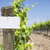 grape wine vineyard with wooden post holding blank sign stock photo © feverpitch