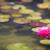 Blossom · розовый · красоту · тропические · белый - Сток-фото © feverpitch
