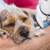 bonitinho · terrier · cachorro · veja · mestre · retrato - foto stock © feverpitch