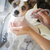 cute jack russell terrier getting a bath in the sink stock photo © feverpitch