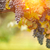 belle · luxuriante · raisins · vignoble · matin · brouillard - photo stock © feverpitch