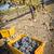 munkások · aratás · érett · vörösbor · szőlő · egy - stock fotó © feverpitch