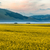 blooming rapeseed at piano grande umbria italy stock photo © fisfra