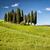 manzara · güzel · bahar · Toskana · İtalya - stok fotoğraf © fisfra