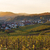 vineyards in pfalz at sunset germany stock photo © fisfra