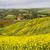 Toscana · panorama · fiori · Italia · cielo · casa - foto d'archivio © fisfra