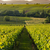 vineyards in later afternoon light pfalz germany stock photo © fisfra