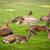 herd of fallow deers lat dama dama on a meadow stock photo © fisfra