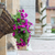 flowers at marketplace in pienza tuscany stock photo © fisfra