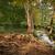реке · лес · лет · трава - Сток-фото © fisfra