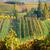 осень · пейзаж · Ганновер · Германия · дерево · древесины - Сток-фото © fisfra