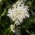blanco · flores · mesa · flor · verde · medicina - foto stock © fisfra
