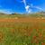virágzó · mező · hegyek · tavasz · tájkép · napos · idő - stock fotó © fisfra