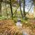 bolderwood in the new forest stock photo © flotsom