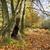 新しい · 森林 · ポニー · 白 · 種馬 · 公園 - ストックフォト © flotsom