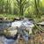 floresta · rio · água · paisagem - foto stock © flotsom