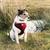trabalhando · terrier · jack · russell · terrier · vermelho · grama - foto stock © flotsom