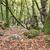 anciens · sud · bord · paysage · arbres · été - photo stock © flotsom