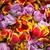 vág · tulipánok · lövés · virág · levél · háttér - stock fotó © fogen