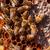 bijen · huis · hout · natuur - stockfoto © fogen