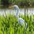 болото · куриные · воды · птица · синий - Сток-фото © fogen