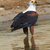 fish eagle stock photo © forgiss