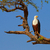 peces · águila · retrato · naturaleza · aves · África - foto stock © forgiss