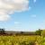 szőlőskert · Dél-Afrika · gyönyörű · külváros · Fokváros · égbolt - stock fotó © forgiss