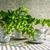 natureza · morta · buquê · branco · flores · madeira · natureza - foto stock © fotoaloja