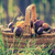 съедобный · гриб · лес · осень · осень · природного - Сток-фото © fotoaloja