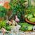pepinos · componentes · fazenda · mercado · planta - foto stock © fotoaloja