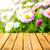 spring background daisies wooden panel stock photo © fotoaloja