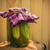 cetrioli · primo · piano · view · alimentare · luce - foto d'archivio © fotoaloja
