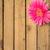 wood background wooden nature raw boards material flower gerbera stock photo © fotoaloja