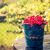 rojo · grosella · frutas · cubo · verano · lluvia - foto stock © fotoaloja