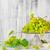 színes · bor · szőlő · növekvő · tavasz · étel - stock fotó © fotoaloja