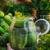jar · augurken · ander · ingrediënten · boerderij · markt - stockfoto © fotoaloja