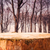 pine stump background autumn forest stock photo © fotoaloja