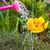水まき · 花 · 草 · 春 · 水 - ストックフォト © fotoaloja