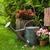 inny · narzędzia · roślin · wiosną · ogród · trawy - zdjęcia stock © fotoaloja