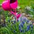 plantas · grama · bocal · natureza - foto stock © fotoaloja