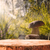 bos · vruchten · outdoor · diversiteit · glas · tuin - stockfoto © fotoaloja