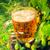 levadura · malta · ingrediente · cerveza · verde · beber - foto stock © fotoaloja
